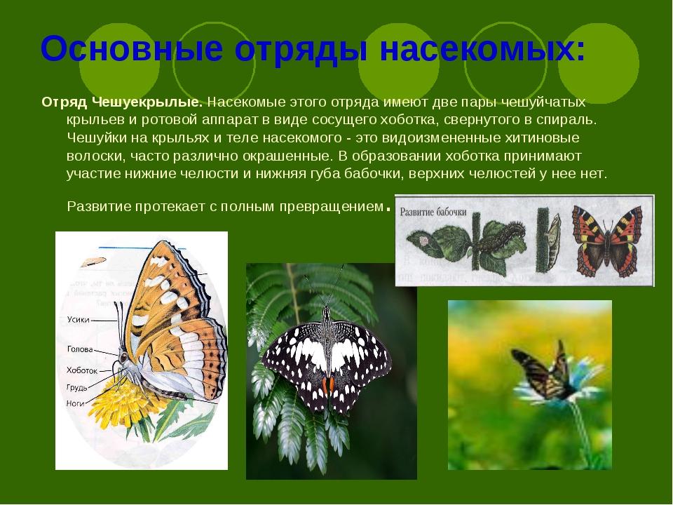 Основные отряды насекомых: Отряд Чешуекрылые.Насекомые этого отряда имеют дв...