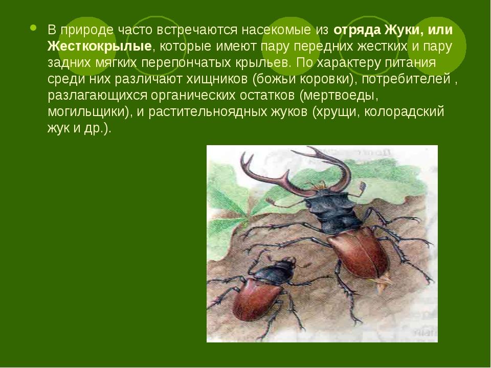 В природе часто встречаются насекомые изотряда Жуки, или Жесткокрылые, котор...