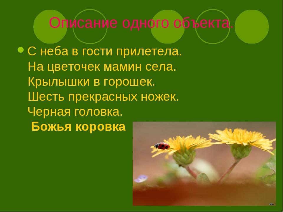 Описание одного объекта. С неба в гости прилетела. На цветочек мамин села. Кр...