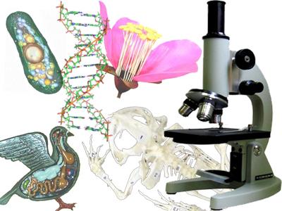 http://gymnasium7.com/wp-content/uploads/2010/12/biology.jpg