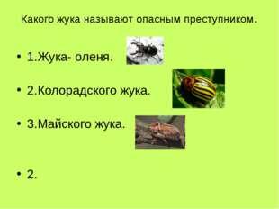 Какого жука называют опасным преступником. 1.Жука- оленя. 2.Колорадского жука