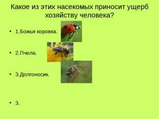 Какое из этих насекомых приносит ущерб хозяйству человека? 1.Божья коровка. 2