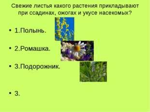 Свежие листья какого растения прикладывают при ссадинах, ожогах и укусе насек