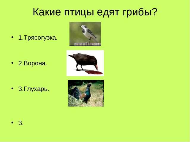 Какие птицы едят грибы? 1.Трясогузка. 2.Ворона. 3.Глухарь. 3.