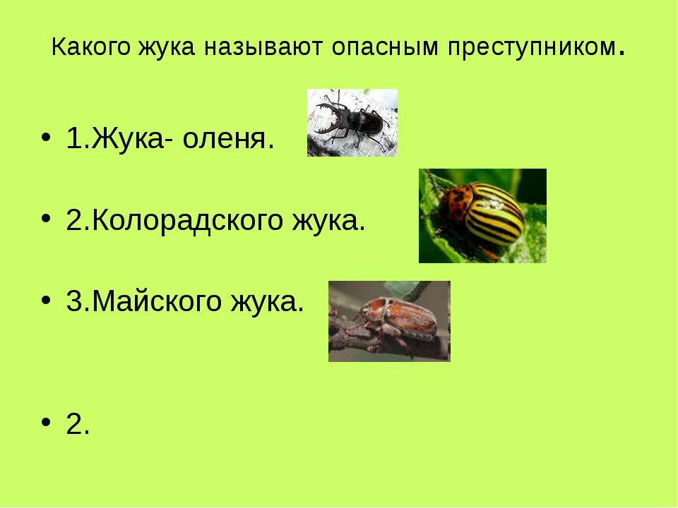 Какого жука называют опасным преступником. 1.Жука- оленя. 2.Колорадского жука...