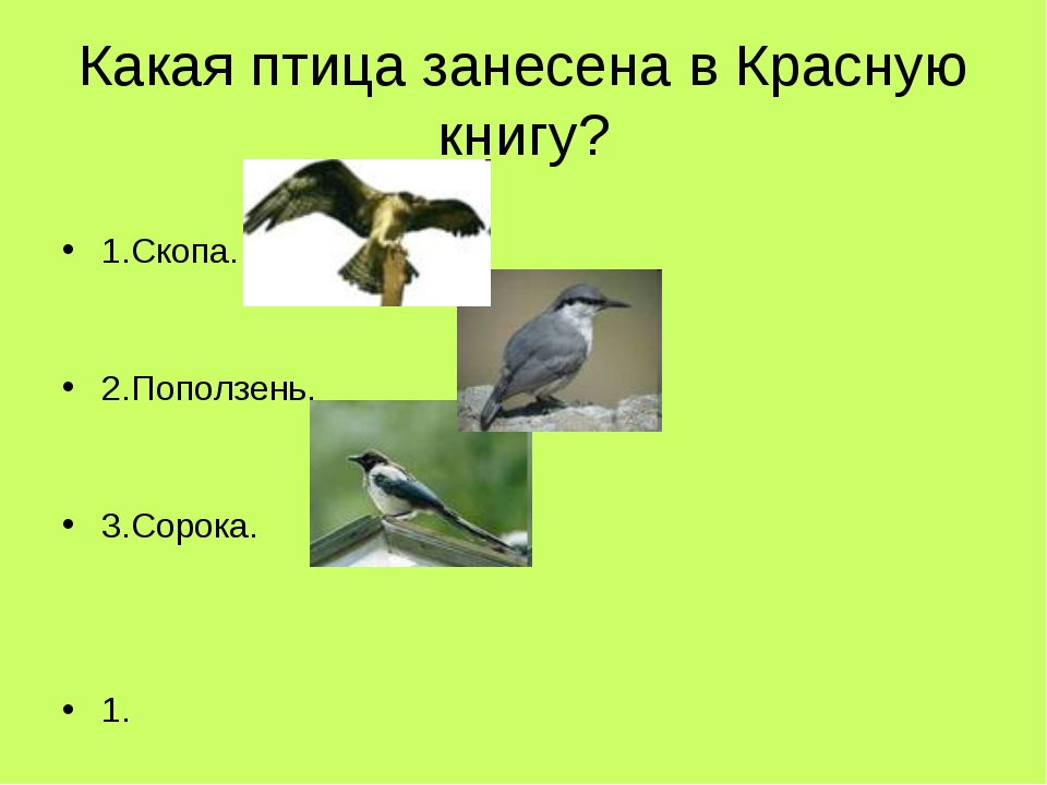 Какая птица занесена в Красную книгу? 1.Скопа. 2.Поползень. 3.Сорока. 1.