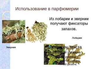 Эверния Использование в парфюмерии Лобария Из лобарии и эвернии получают фикс