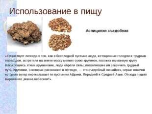 Использование в пищу «Существует легенда о том, как в бесплодной пустыне люди