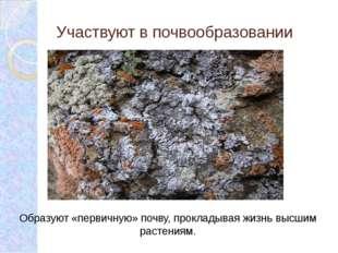 Участвуют в почвообразовании Образуют «первичную» почву, прокладывая жизнь вы