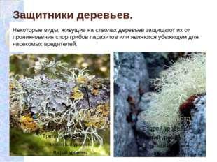 Защитники деревьев. Некоторые виды, живущие на стволах деревьев защищают их о