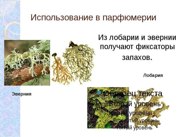 Эверния Использование в парфюмерии Лобария Из лобарии и эвернии получают фикс...