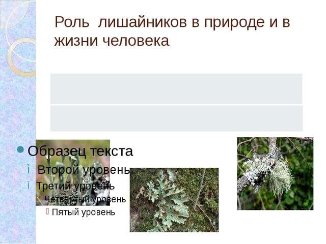 Роль лишайников в природе и в жизни человека Роль лишайников в природе Роль л...