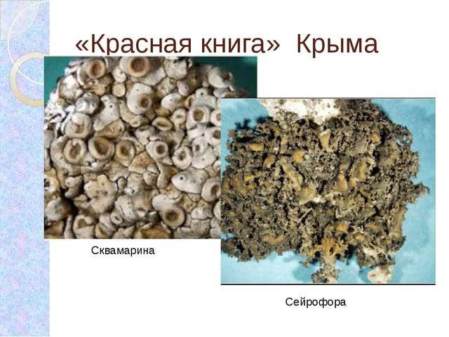 «Красная книга» Крыма Сквамарина Сейрофора