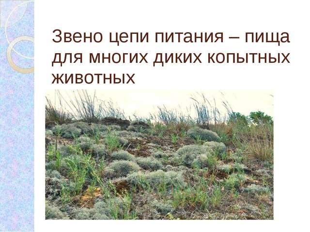 Звено цепи питания – пища для многих диких копытных животных