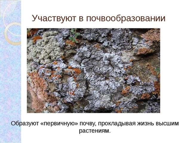 Участвуют в почвообразовании Образуют «первичную» почву, прокладывая жизнь вы...
