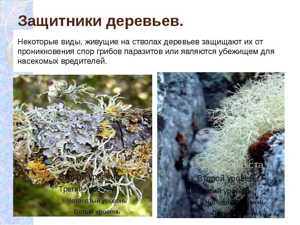 Защитники деревьев. Некоторые виды, живущие на стволах деревьев защищают их о...