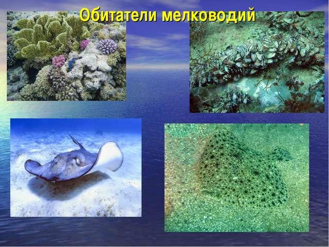 Обитатели мелководий