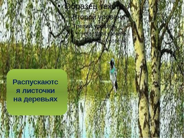 Распускаются листочки на деревьях