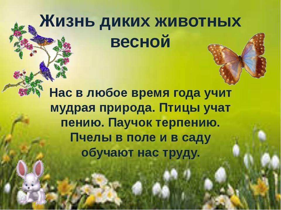 Жизнь диких животных весной Нас в любое время года учит мудрая природа. Птицы...