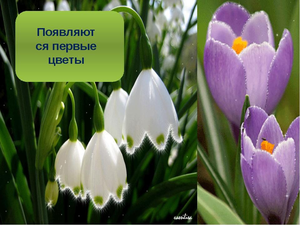 Появляются первые цветы