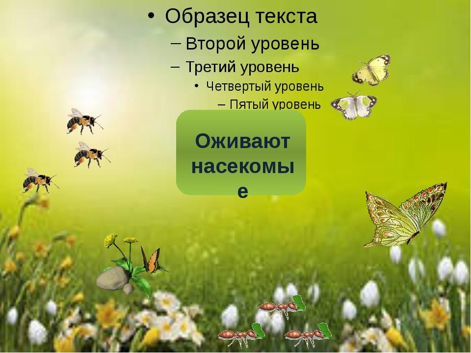 Оживают насекомые