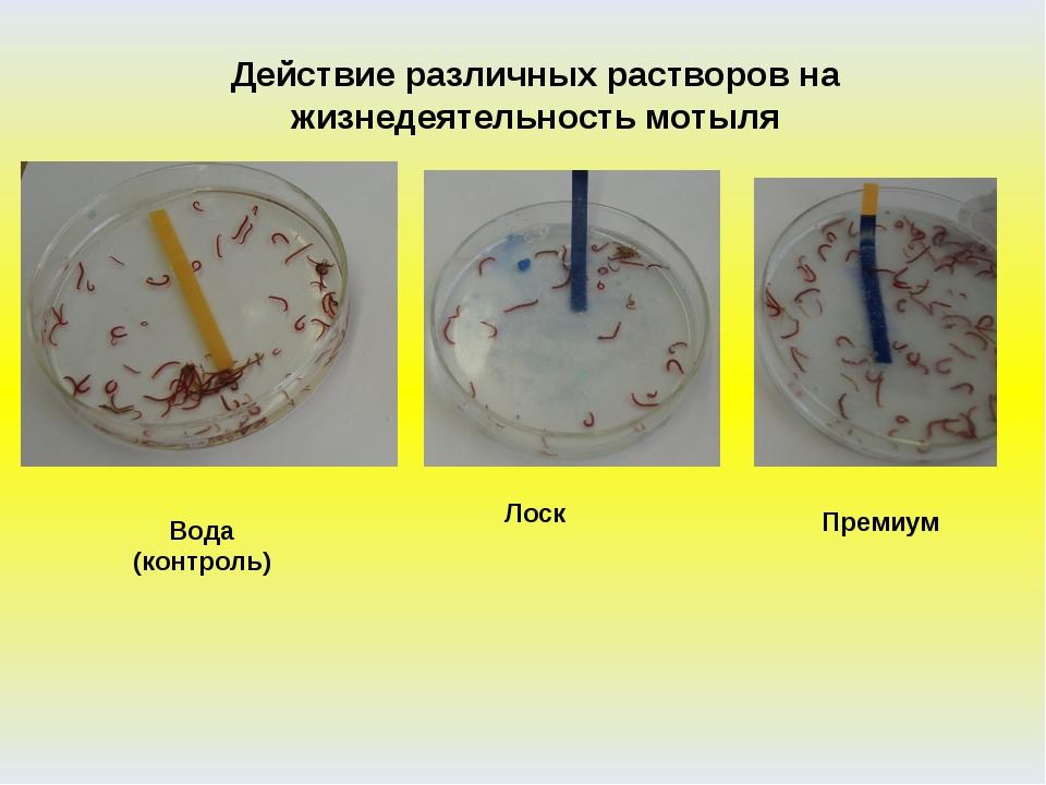 Действие различных растворов на жизнедеятельность мотыля Вода (контроль) Лоск...