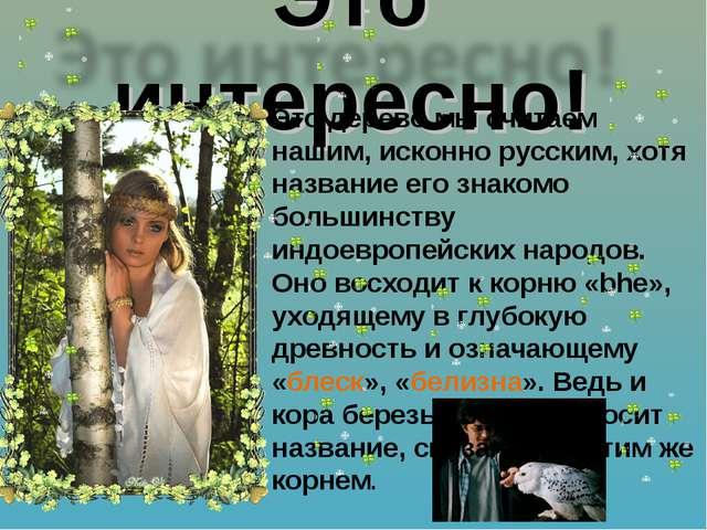 Это дерево мы считаем нашим, исконно русским, хотя название его знакомо больш...