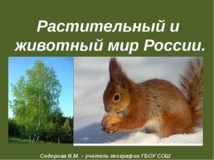 Растительный и животный мир России. Сидорова В.М. – учитель географии ГБОУ СО