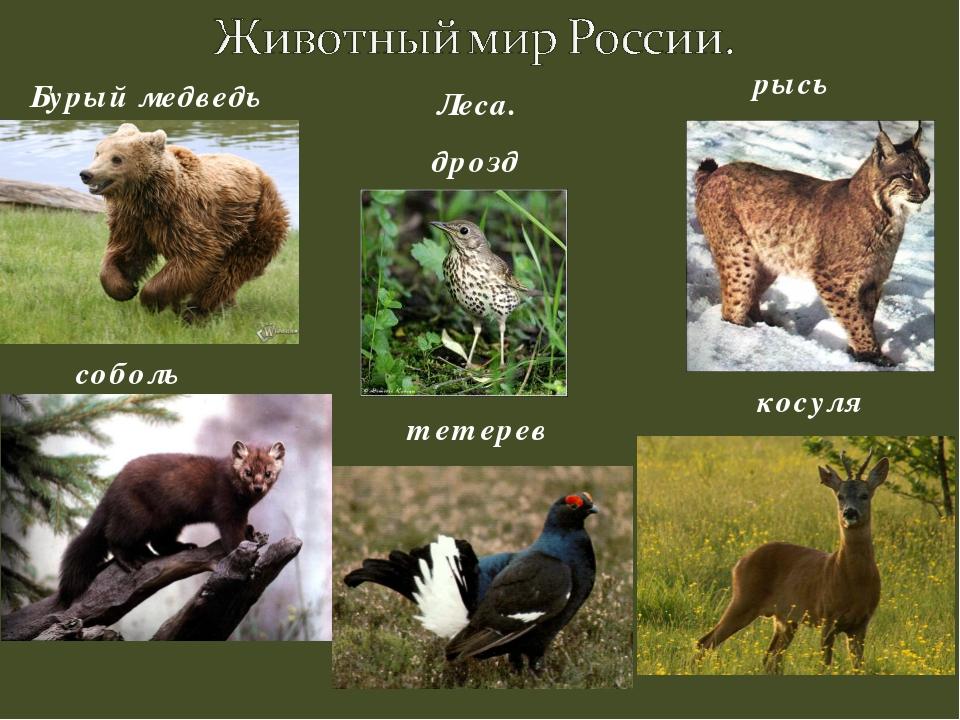 Реферат на тему животный мир 3947