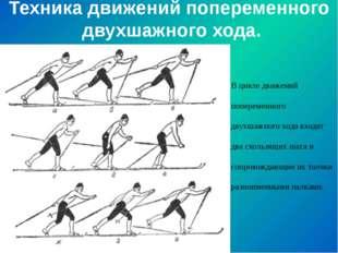 Техника движений попеременного двухшажного хода. В цикле движений попеременно