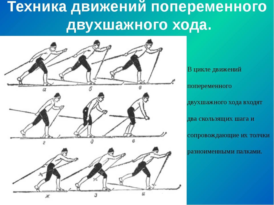 Техника движений попеременного двухшажного хода. В цикле движений попеременно...
