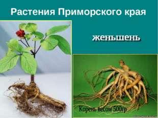Растения Приморского края