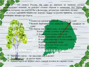 Береза – это символ России. Ни одно из деревьев не вмещает столько национальн