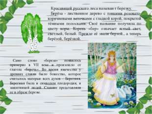 Красавицей русского леса называют березку. Берёза - лиственное дерево с тонки