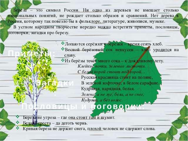 Береза – это символ России. Ни одно из деревьев не вмещает столько национальн...