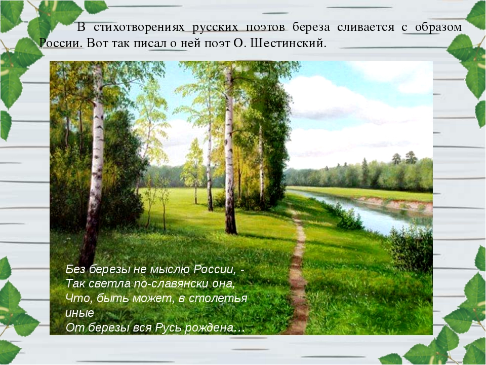 В стихотворениях русских поэтов береза сливается с образом России. Вот так пи...