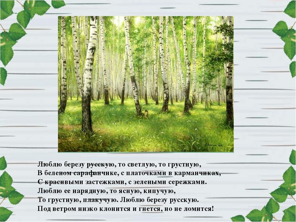 Люблю березу русскую, то светлую, то грустную, В беленом сарафанчике, с плато...