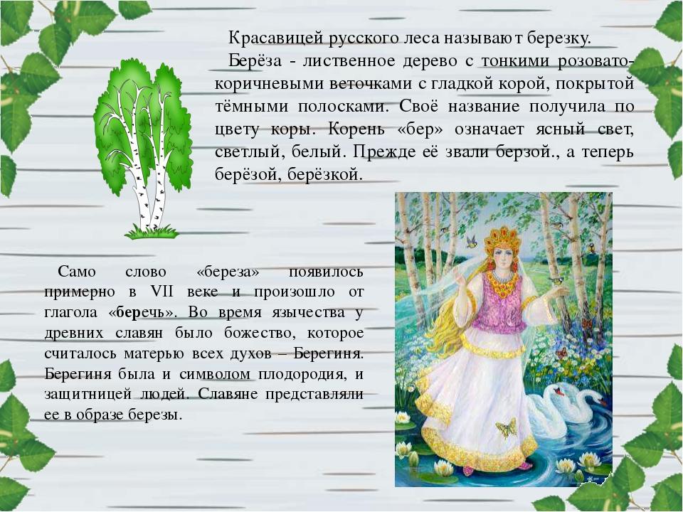 Красавицей русского леса называют березку. Берёза - лиственное дерево с тонки...
