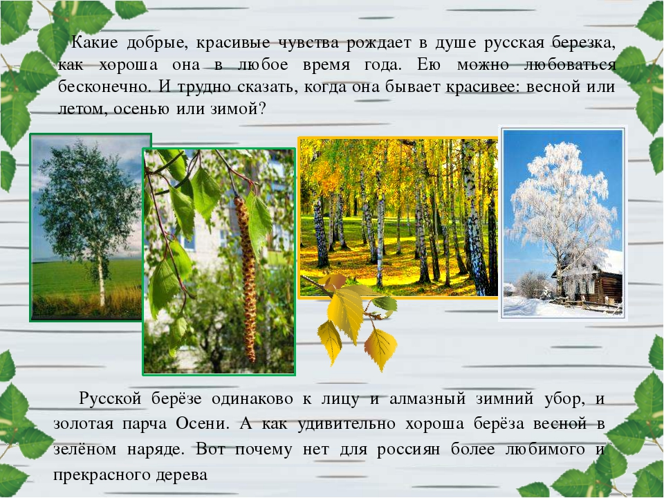 Какие добрые, красивые чувства рождает в душе русская березка, как хороша она...