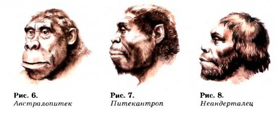 Предшественники людей