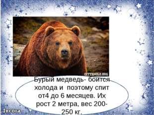 Бурый медведь- боится холода и поэтому спит от4 до 6 месяцев. Их рост 2 метра