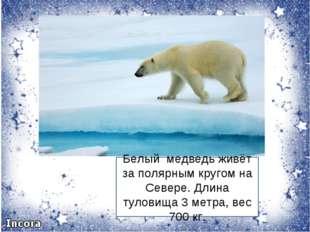 Белый медведь живёт за полярным кругом на Севере. Длина туловища 3 метра, вес