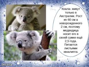 Коала- живут только в Австралии. Рост их 60 см а новорожденного 2 см, поэтому