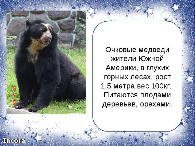 Очковые медведи жители Южной Америки, в глухих горных лесах. рост 1.5 метра в...