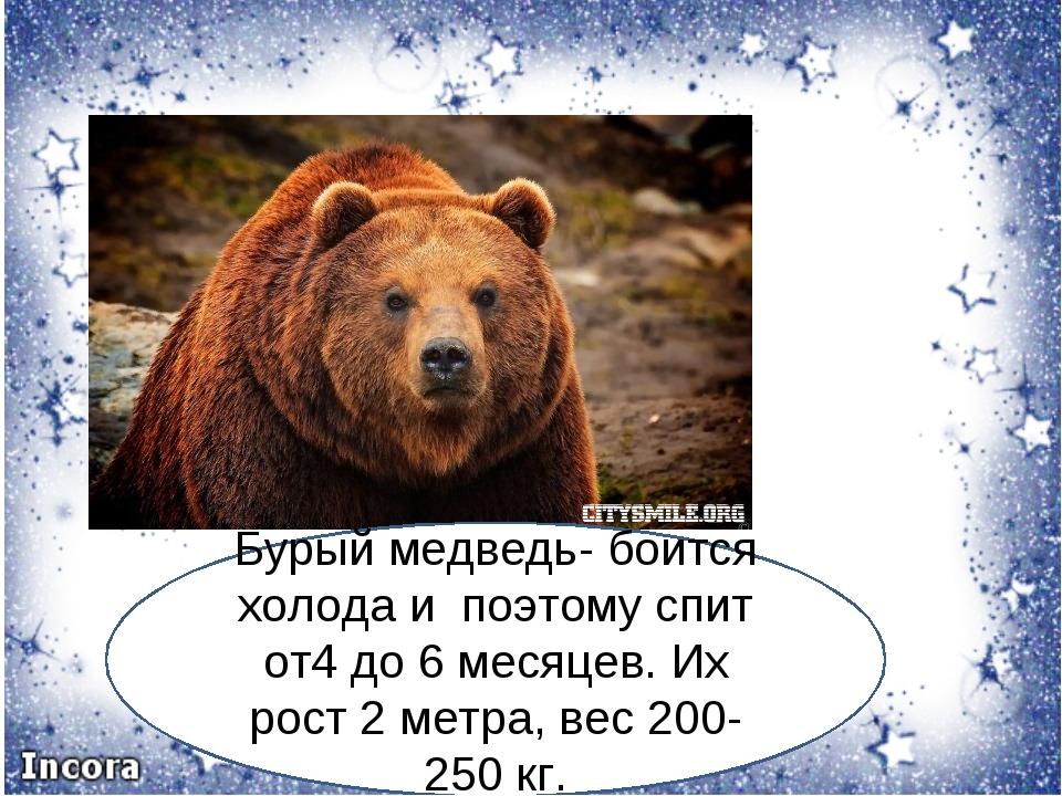 Бурый медведь- боится холода и поэтому спит от4 до 6 месяцев. Их рост 2 метра...