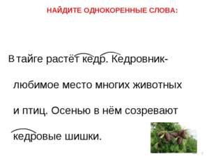 тайге растёт кедр. Кедровник- любимое место многих животных и птиц. Осенью в