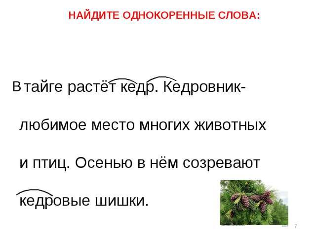 тайге растёт кедр. Кедровник- любимое место многих животных и птиц. Осенью в...