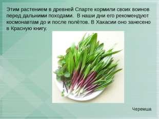 Этим растением в древней Спарте кормили своих воинов перед дальними походами.