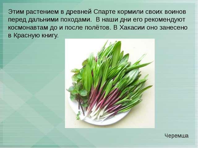 Этим растением в древней Спарте кормили своих воинов перед дальними походами....