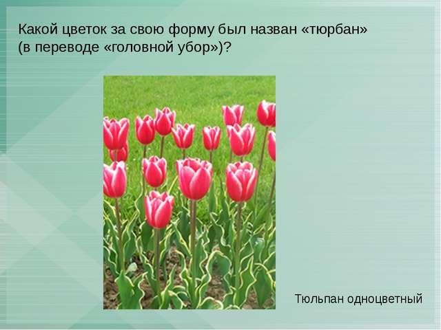 Какой цветок за свою форму был назван «тюрбан» (в переводе «головной убор»)?...